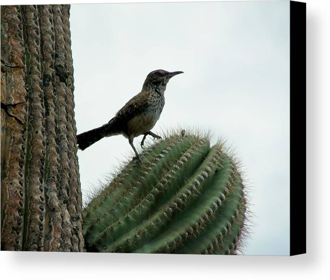 Arizona Canvas Print featuring the photograph Ouch by Wayne Toutaint
