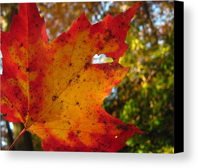 Landscape Canvas Print featuring the photograph Perfection In Nature by Shanna Blasingame