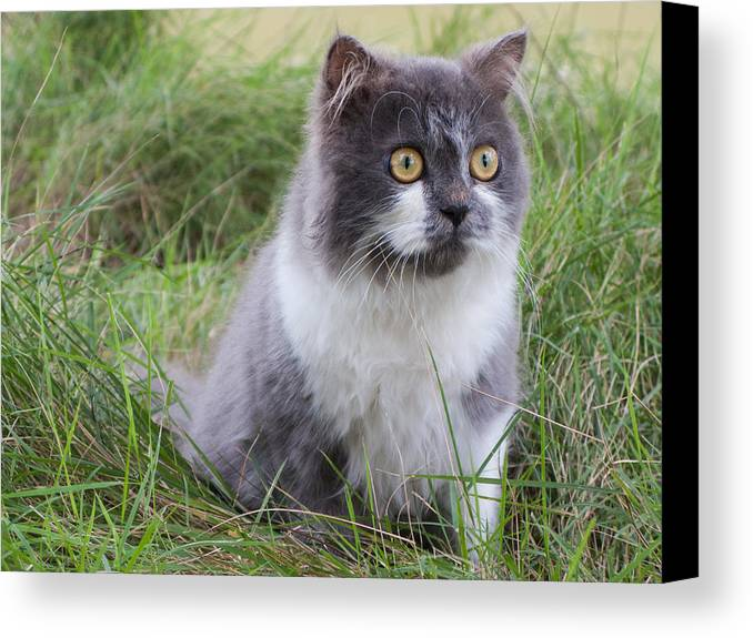 Adorable Canvas Print featuring the photograph Persian Cat Sit In Green Yard by Nawarat Namphon