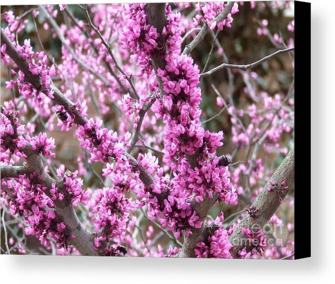 Pink Canvas Print featuring the photograph Pink Flower by Andrea Anderegg