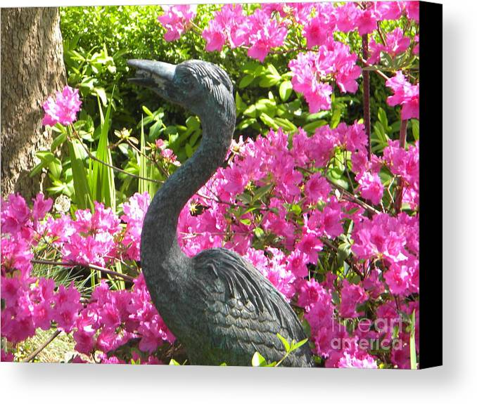 Swan Canvas Print featuring the painting Pinkness Of A Bird by Kimberlee Weisker