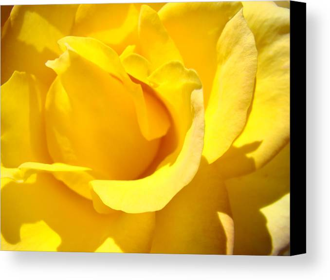Rose Canvas Print featuring the photograph Rose Petal Flower Yellow Colorful Rose Floral Baslee by Baslee Troutman