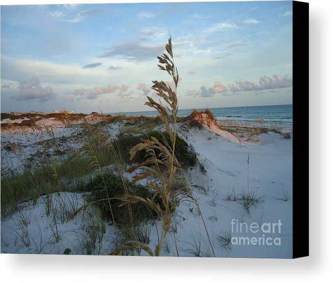 Photography.landscape Grayton Beach Canvas Print featuring the photograph Sea Oat by April Murray