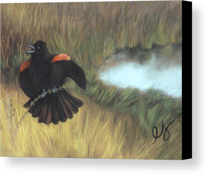 Blackbird Canvas Print featuring the pastel Show-off by Estephy Sabin Figueroa