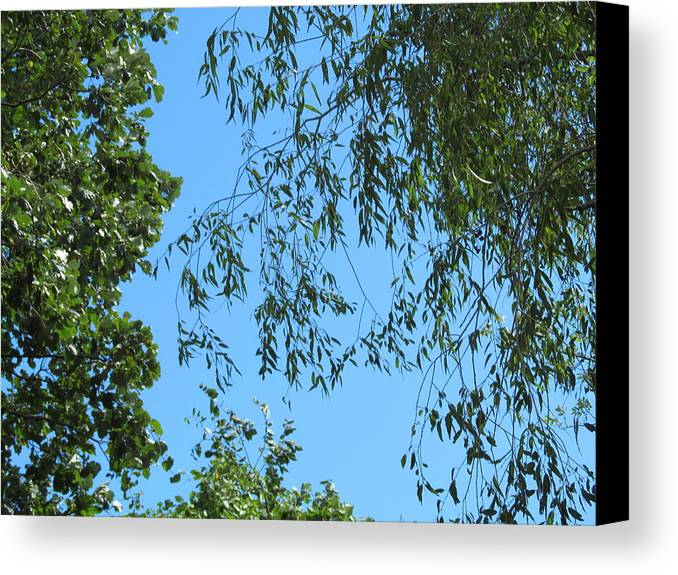 Blue Canvas Print featuring the photograph Sky And Leaves by Tina M Wenger