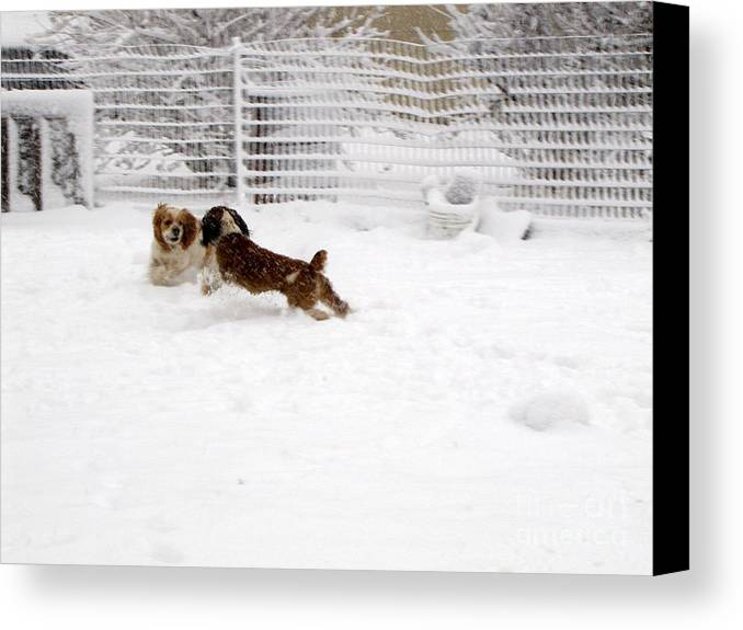 Animals Canvas Print featuring the photograph Snow Day Play by Debbie Portwood