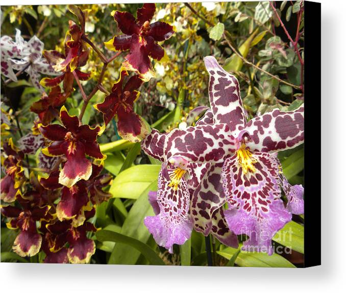 Nature Canvas Print featuring the photograph Spotted Flowers by Silvie Kendall