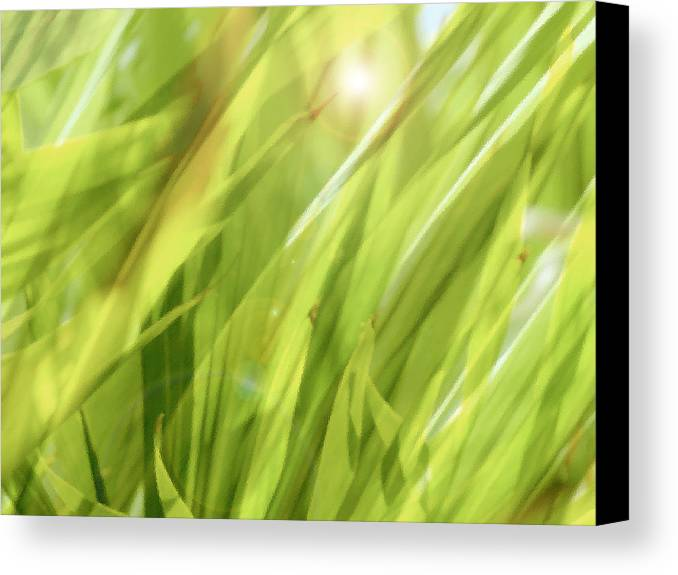 Green Canvas Print featuring the photograph Summertime Green by Ann Powell