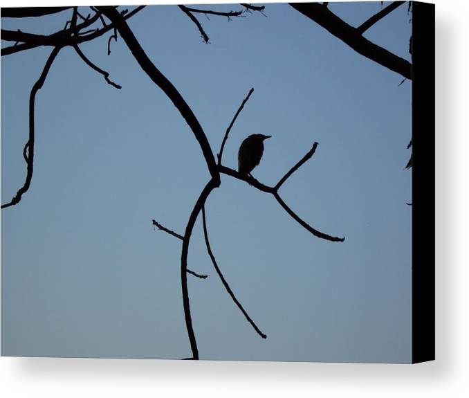 Photography Canvas Print featuring the photograph The Bird by Pranav Waghmare