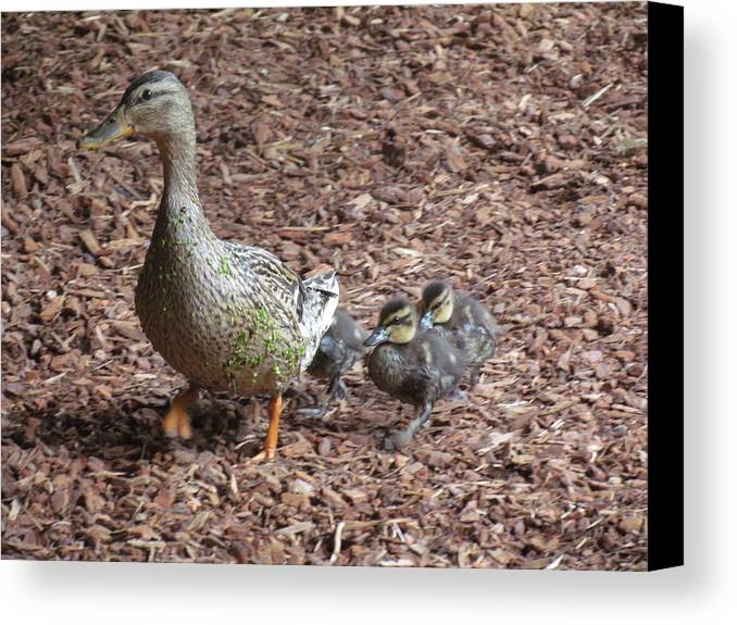 Nature Canvas Print featuring the photograph The Proud Mother by Rivka Waas