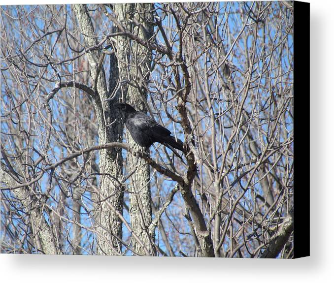 Nature Canvas Print featuring the photograph The Raven by Rivka Waas