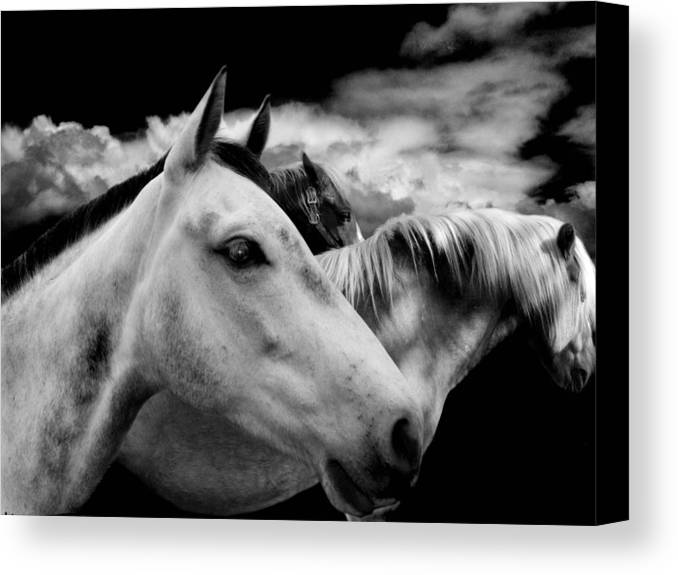 Black And White Canvas Print featuring the photograph The Wait by Maggie Dee