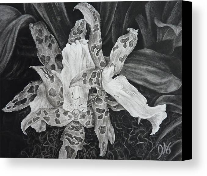 Orchid Canvas Print featuring the drawing Triple Orchid Blossom by Estephy Sabin Figueroa