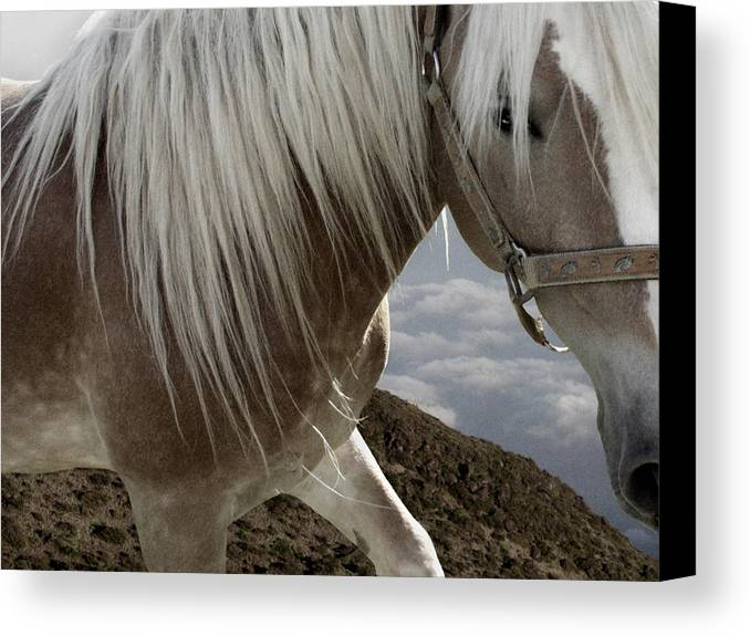 Haflinger Canvas Print featuring the photograph Walking On The Moon by Maggie Dee