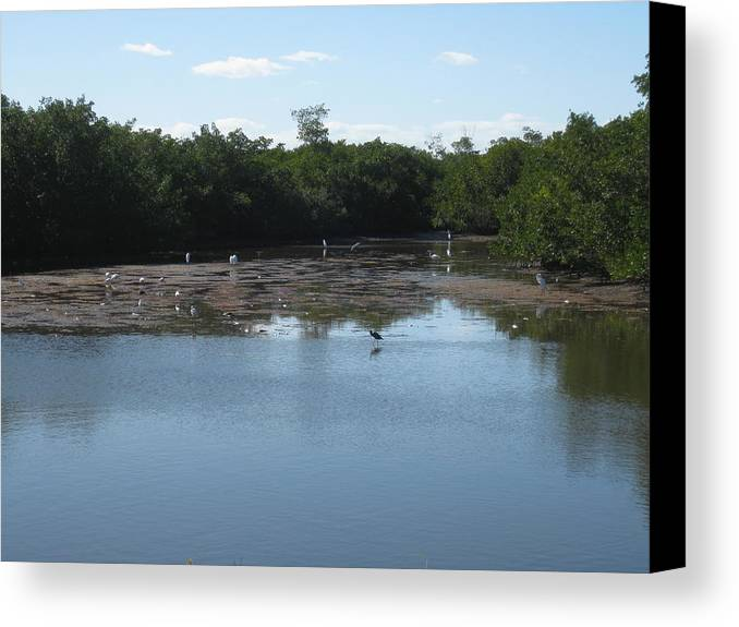 Ding Darling Canvas Print featuring the photograph Wildlife Refuge by S K