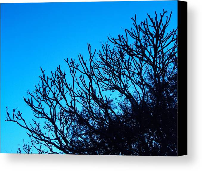 Landscape Canvas Print featuring the photograph Woods And Sky by Pranav Waghmare