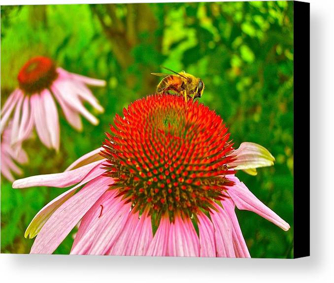 Flowers Canvas Print featuring the photograph You Bee Long To Me by Randy Rosenberger