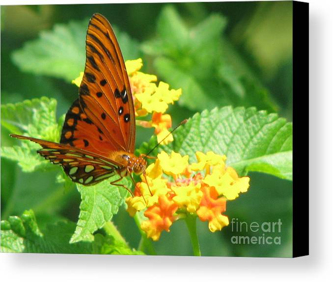 Butterfly Canvas Print featuring the photograph Butterfly by Amanda Barcon