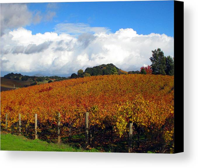 Napa Canvas Print featuring the photograph Untitled by Kim Pascu