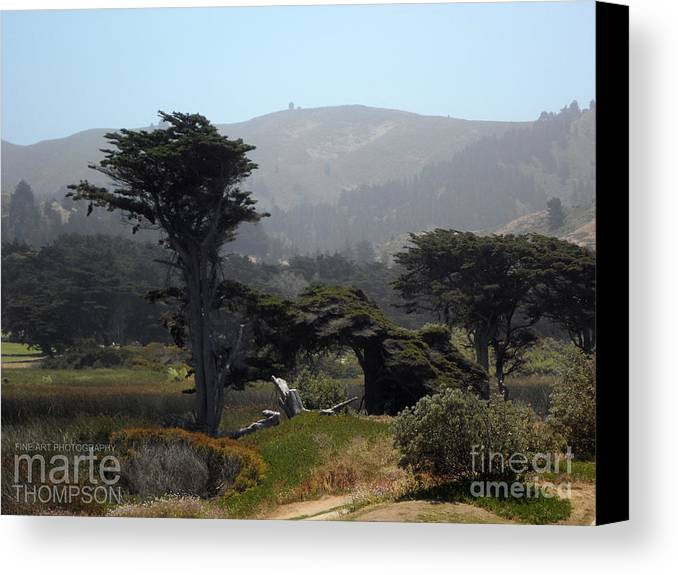 Tree Canvas Print featuring the photograph Sharp Park, Pacifica by Marte Thompson