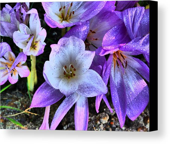 Flower Garden Idaho Photography Canvas Print featuring the photograph Downtown Train by Paul Stanner