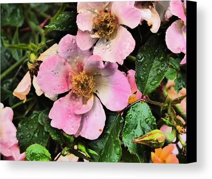 Flower Garden Idabho Photography Canvas Print featuring the photograph The Look Of Love by Paul Stanner