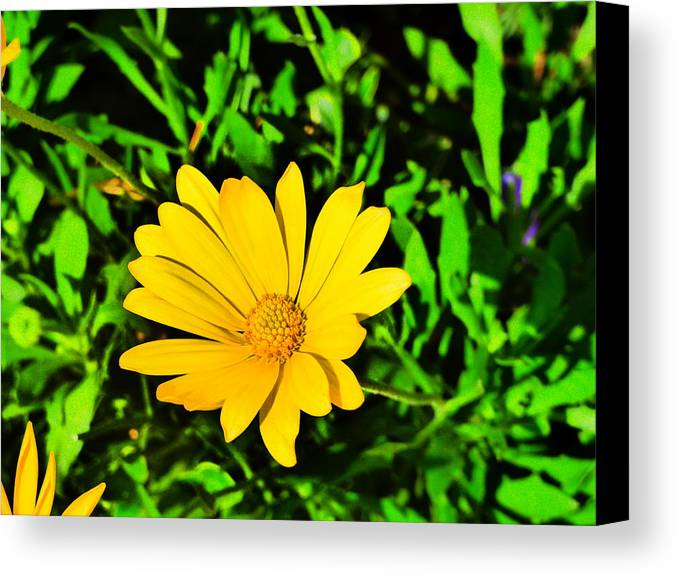 Flower Garden Idaho Photographhy Canvas Print featuring the photograph Elle Est Jolie by Paul Stanner