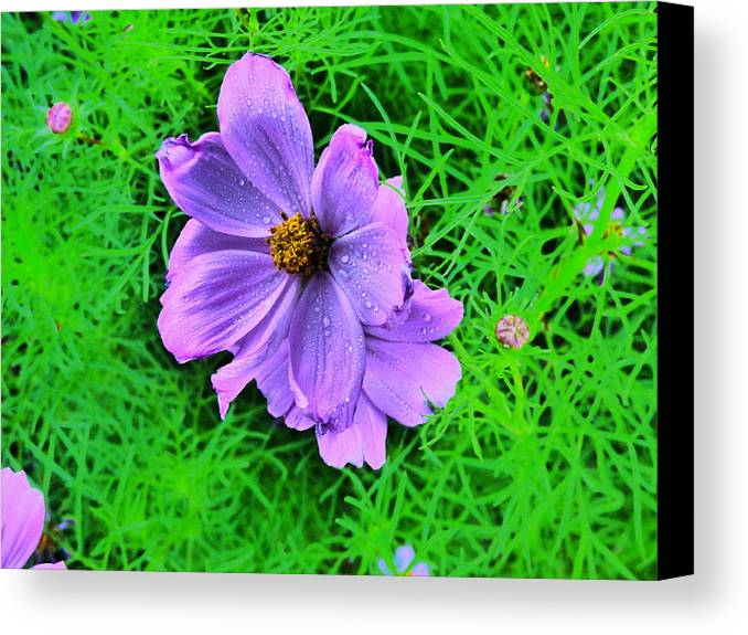Flower Garden Idaho Photography Canvas Print featuring the photograph In The Rain by Paul Stanner