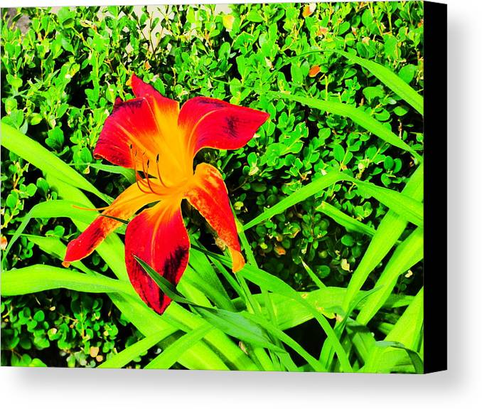Flowers Gardens Idaho Photography Canvas Print featuring the photograph Still by Paul Stanner