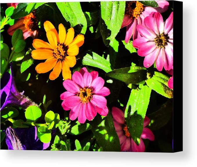 Flower Garden Idaho Photography Canvas Print featuring the photograph Elle Est Jolie by Paul Stanner