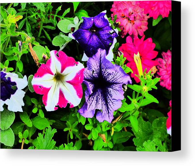Idaho Spring Flowers Gardens Floral Canvas Print featuring the photograph Caravan Of Dreams by Paul Stanner