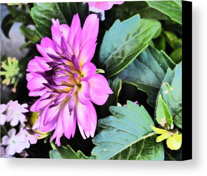 Flower Garden Idaho Photography Canvas Print featuring the photograph Real Real Gone by Paul Stanner