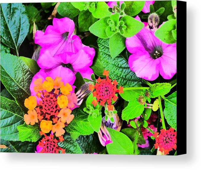 Idaho Spring Flowers Gardens Floral Paul Stanner Canvas Print featuring the photograph Caravan Of Dreams by Paul Stanner