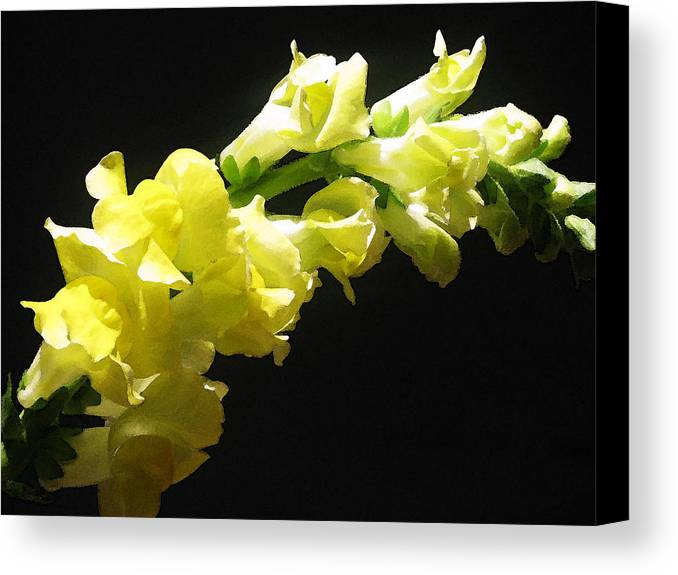 Floral Photos Canvas Print featuring the photograph Nature Series by Ginger Geftakys
