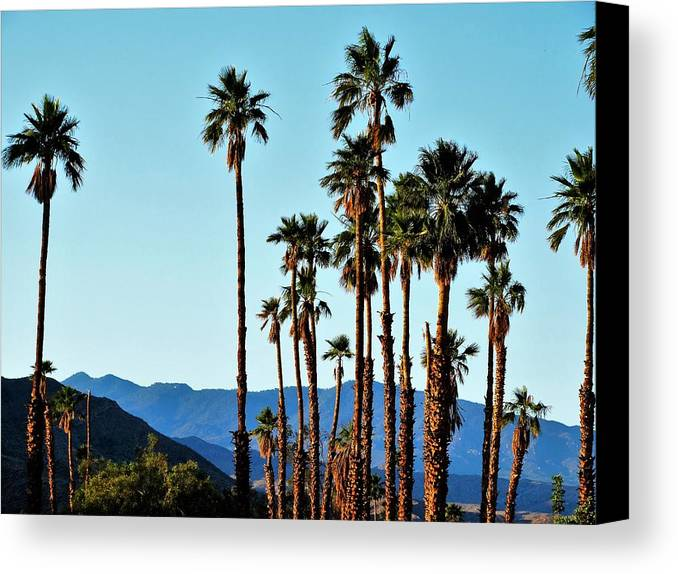 Palm Springs Canvas Print featuring the photograph Palm Springs by Lisa Dunn