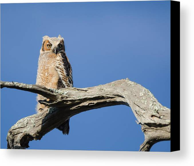 Bird Canvas Print featuring the photograph Birds by Karen Hart