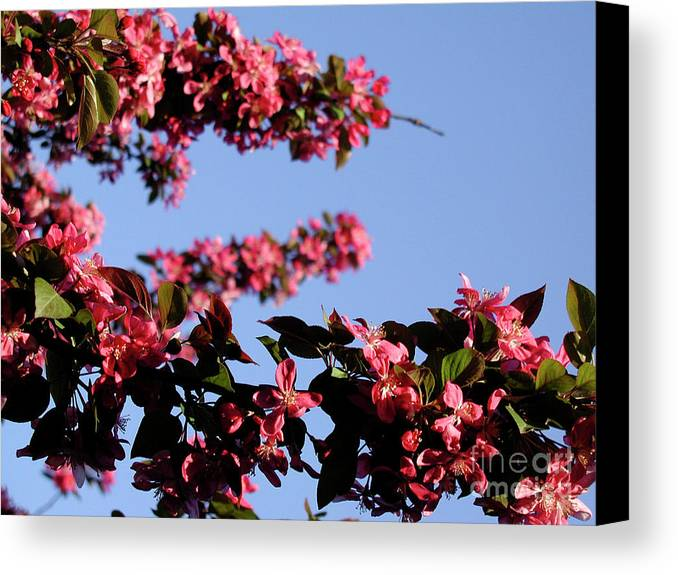Landscape Canvas Print featuring the photograph Art In Nature, Florals by Aleksandra Pomorisac
