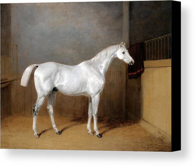 William Barraud Canvas Print featuring the painting A Favourite Grey Horse Belonging To George Reed Standing In A Loose Box by William Barraud