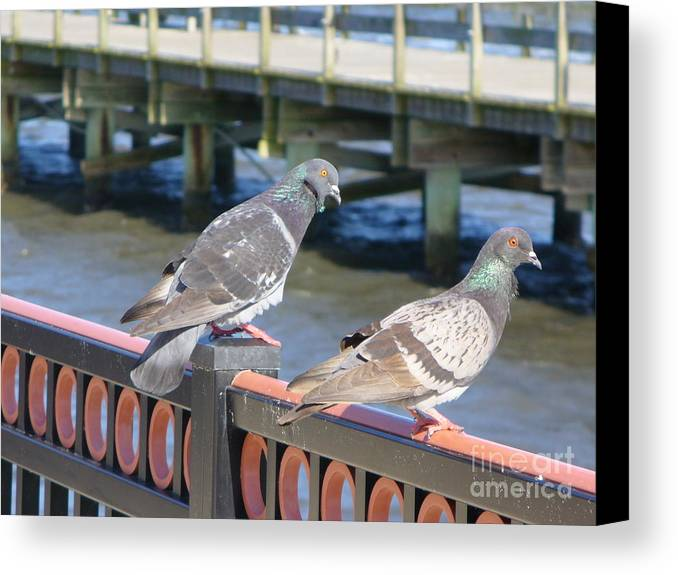 Bird Canvas Print featuring the photograph A Pair by Stephanie Richards