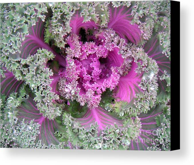 Nature Canvas Print featuring the photograph A Study In The Shades Of Spring Two by Lucyna A M Green