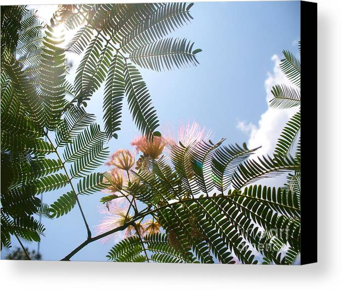 Flower Canvas Print featuring the photograph Above by Stephanie Richards