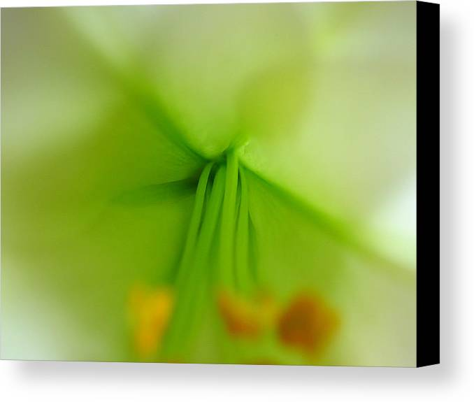 abstract easter lily petals canvas print canvas art by juergen roth