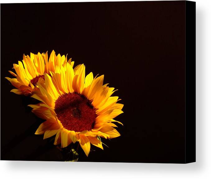 Sunflowers Canvas Print featuring the photograph Always Into The Sun by Juana Maria Garcia-Domenech