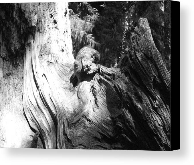 Black And White Canvas Print featuring the photograph Angelic by TL Randleman