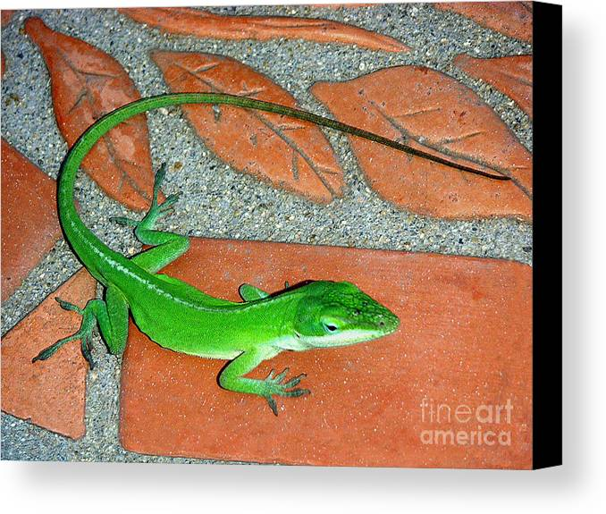 Nature Canvas Print featuring the photograph Anole On Chair Tiles by Lucyna A M Green