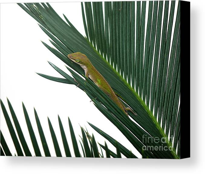 Nature Canvas Print featuring the photograph Anole With Palm - Coy by Lucyna A M Green