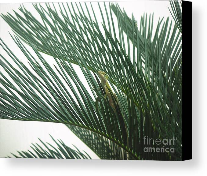 Nature Canvas Print featuring the photograph Anole With Palm - Entangled by Lucyna A M Green