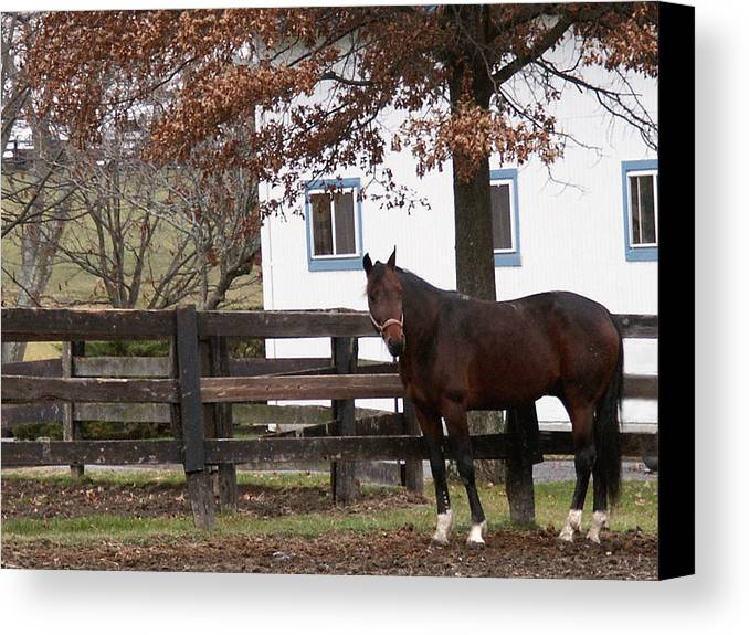 Horse Canvas Print featuring the photograph Anticipation by Chuck Shafer