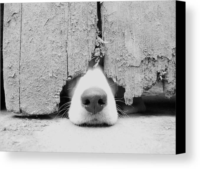 Horizontal Canvas Print featuring the photograph Anyone Out There? by By Jake P Johnson