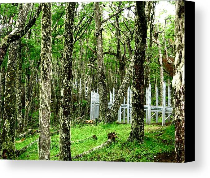 El Calafate Canvas Print featuring the photograph Argentina Trees by Ariane Moshayedi